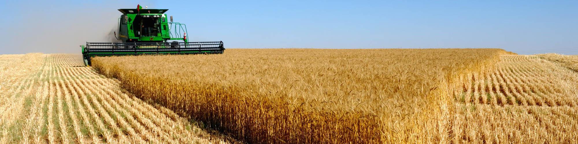 Agricoltura ed orto: prodotti, articoli,attrezzi, attrezzature e soluzioni.