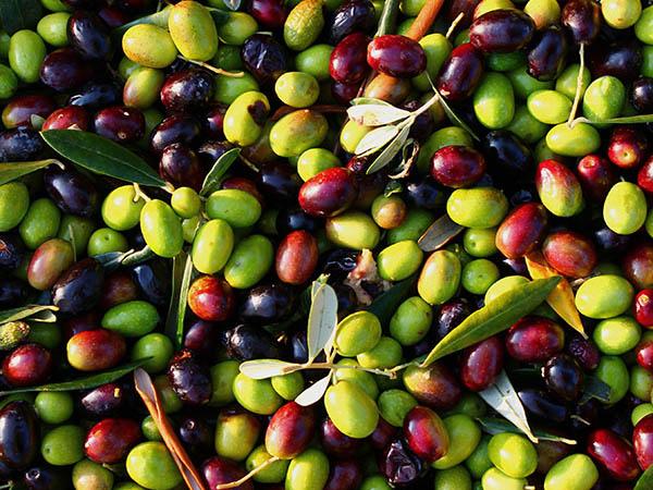 vendita-on-line-prodotti-per-olivocoltura
