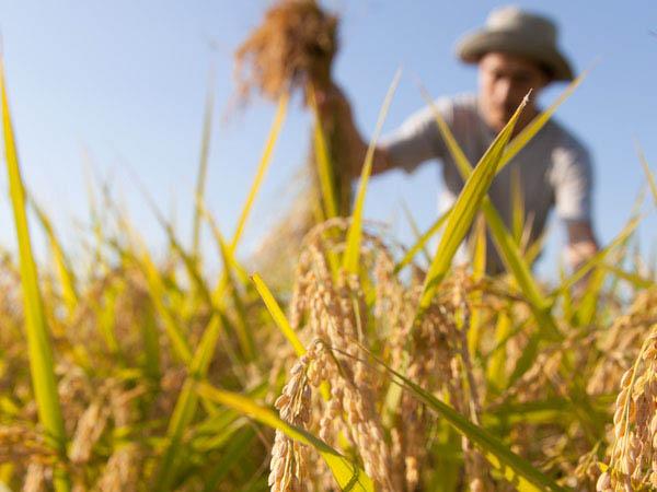 vendita-on-line-prodotti-per-orto-e-agricoltura