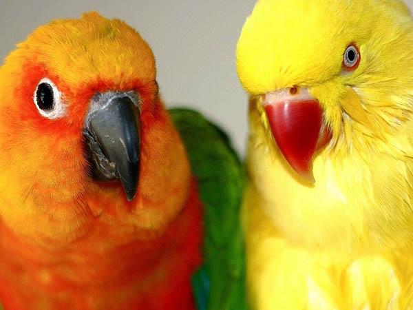 vendita-on-line-prodotti-per-uccelli