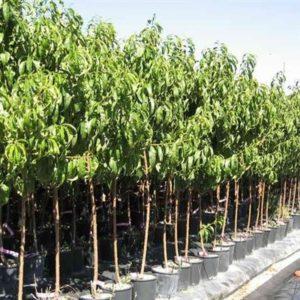 Prodotti emporio della natura - Alberi frutto giardino ...