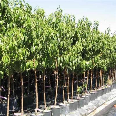 Albero da frutta molte variet emporio della natura - Alberi frutto giardino ...