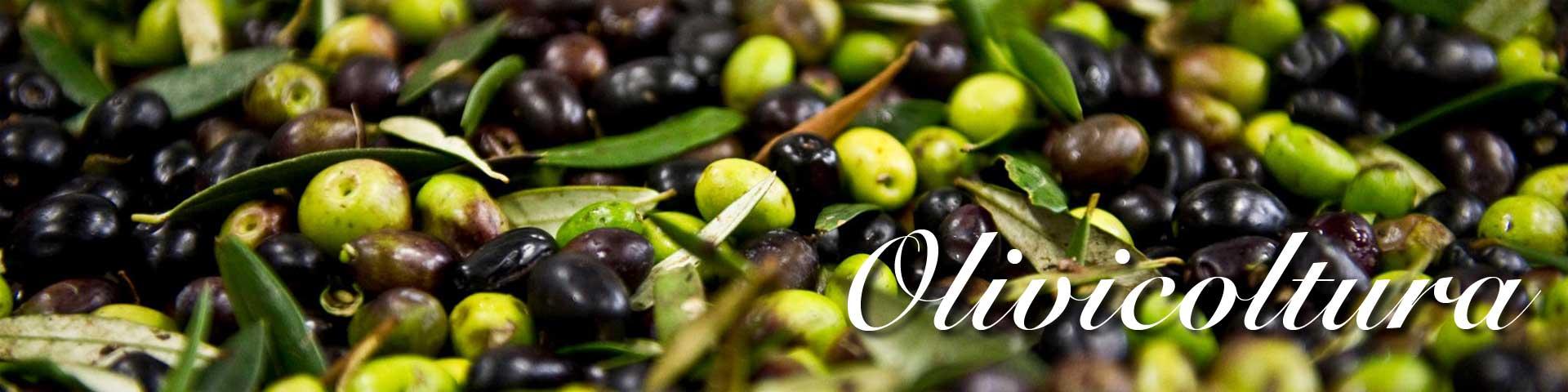 Vendita online attrezzatura per olivicoltura - Attrezzi, prodotti ed accessori per la raccolta delle olive