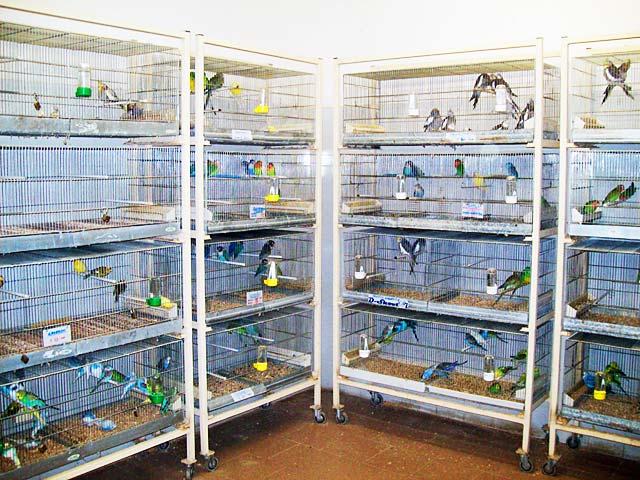 uccelli in vendita online