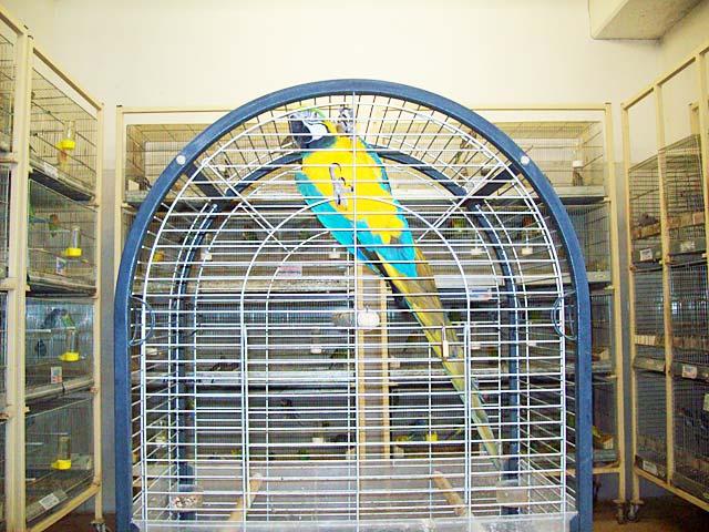 uccelli in vendita
