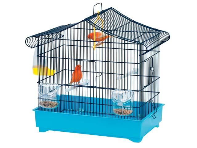 uccelli vendita online
