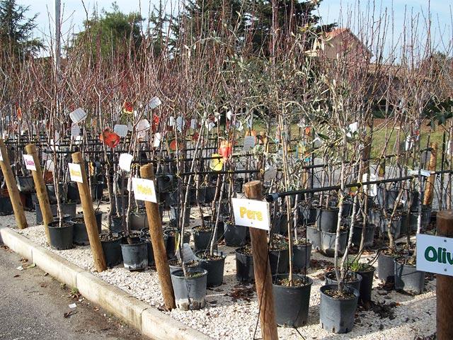 Vendita online alberi da frutto per agricoltura ed orto