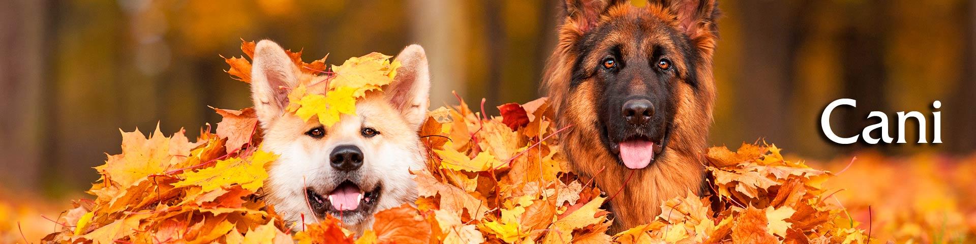 Vendita online cibo per cani alimenti mangimi