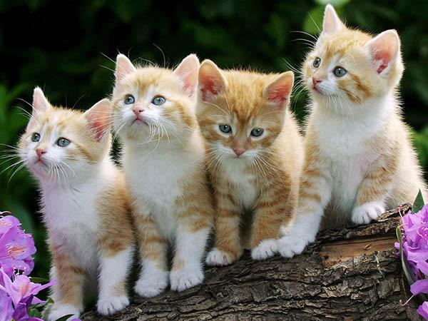 vendita online cibo per gatti alimenti mangimi