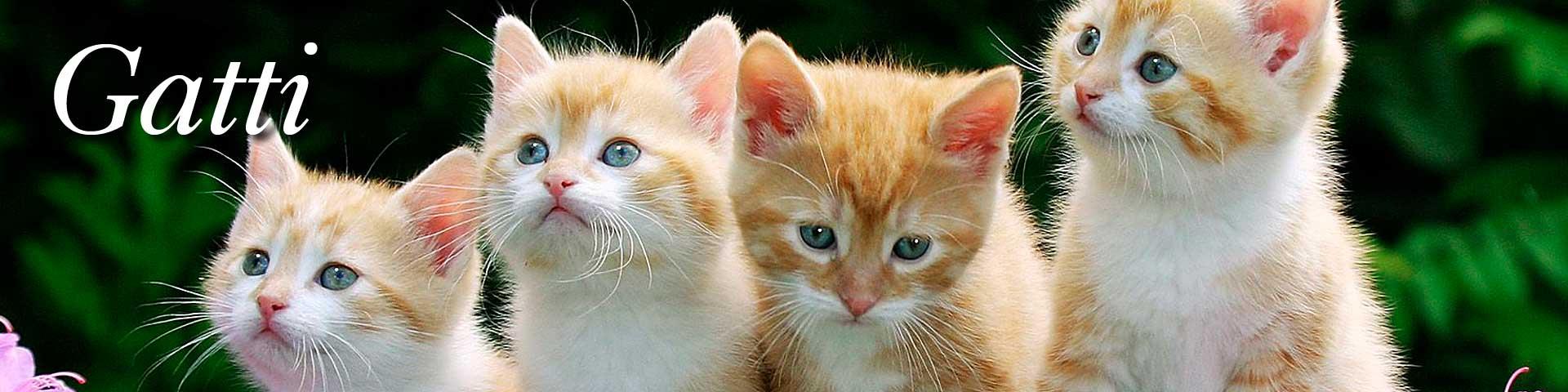 Vendita online cibo per gatti mangimi alimenti