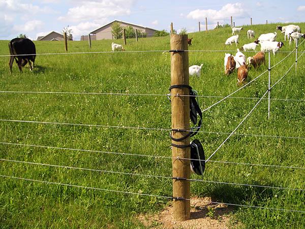 vendita online recinzioni elettrificate progettazione esperti